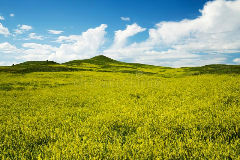 Zwarte Heuvels in Zuid-Dakota royalty-vrije stock fotografie