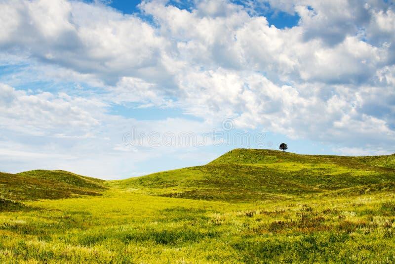 Zwarte Heuvels in Zuid-Dakota royalty-vrije stock foto's