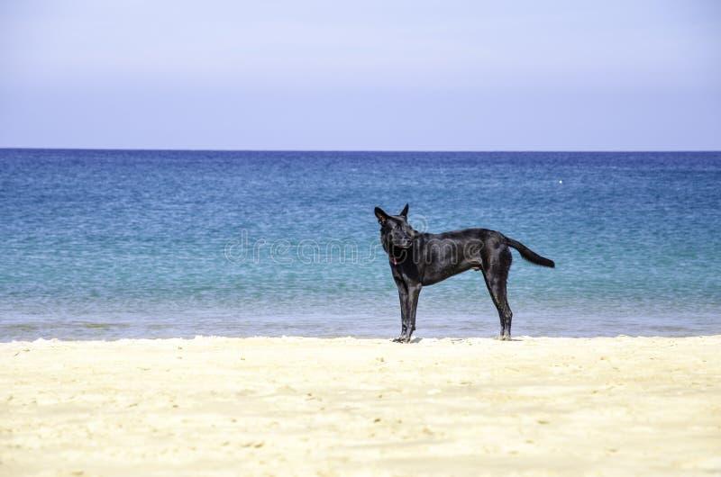 Zwarte hond op mooi strand stock afbeelding