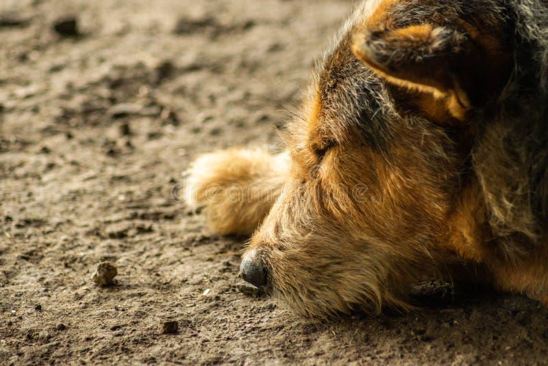 Zwarte hondslaap ter plaatse royalty-vrije stock foto