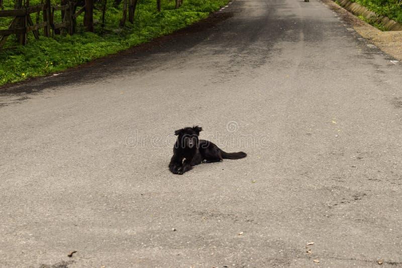 Zwarte hondzitting op de asfaltweg die op een auto wachten om hem te doden Zelfmoordhond stock foto