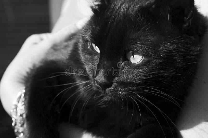 Download Zwarte kat stock foto. Afbeelding bestaande uit looking - 39100472
