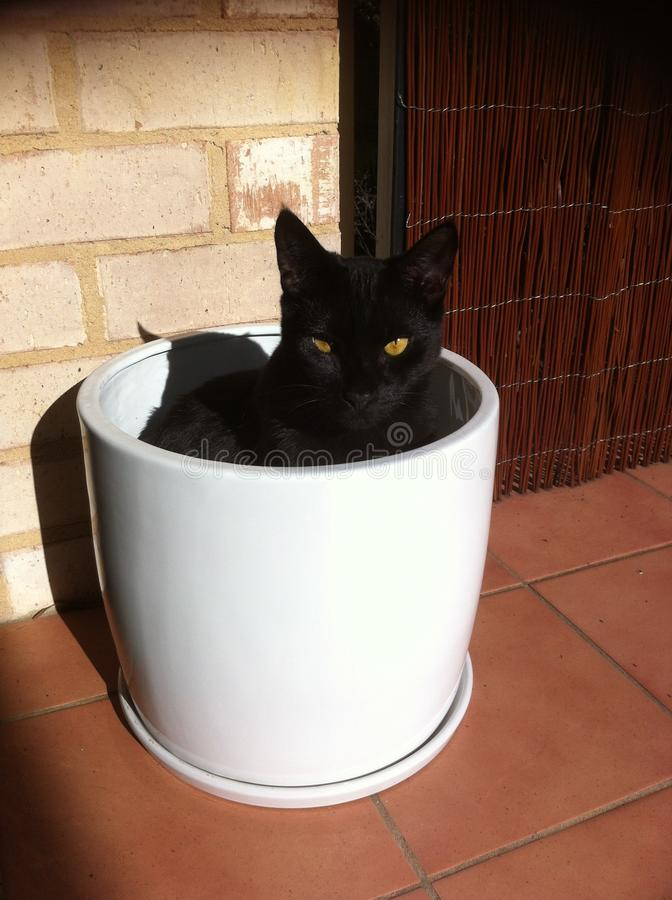 Zwarte kat royalty-vrije stock afbeeldingen