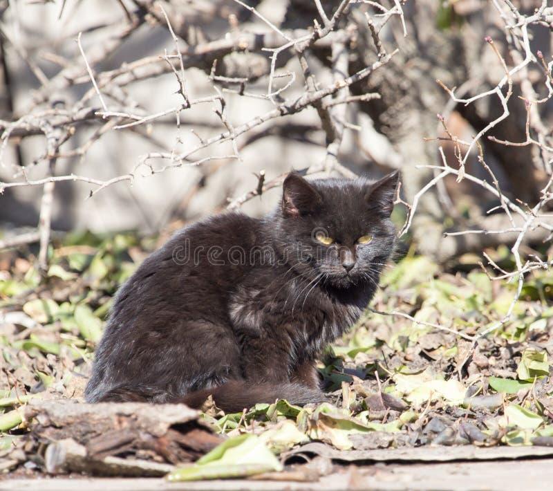 Zwarte kat in aard stock foto