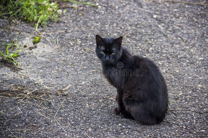 Zwarte kat bij de weg royalty-vrije stock afbeeldingen