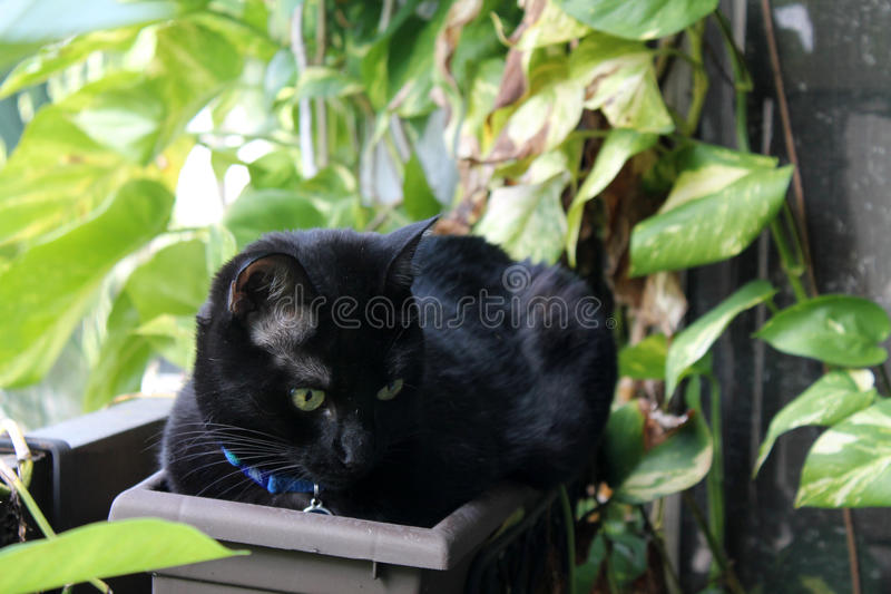 Zwarte kat in bloempot royalty-vrije stock afbeelding