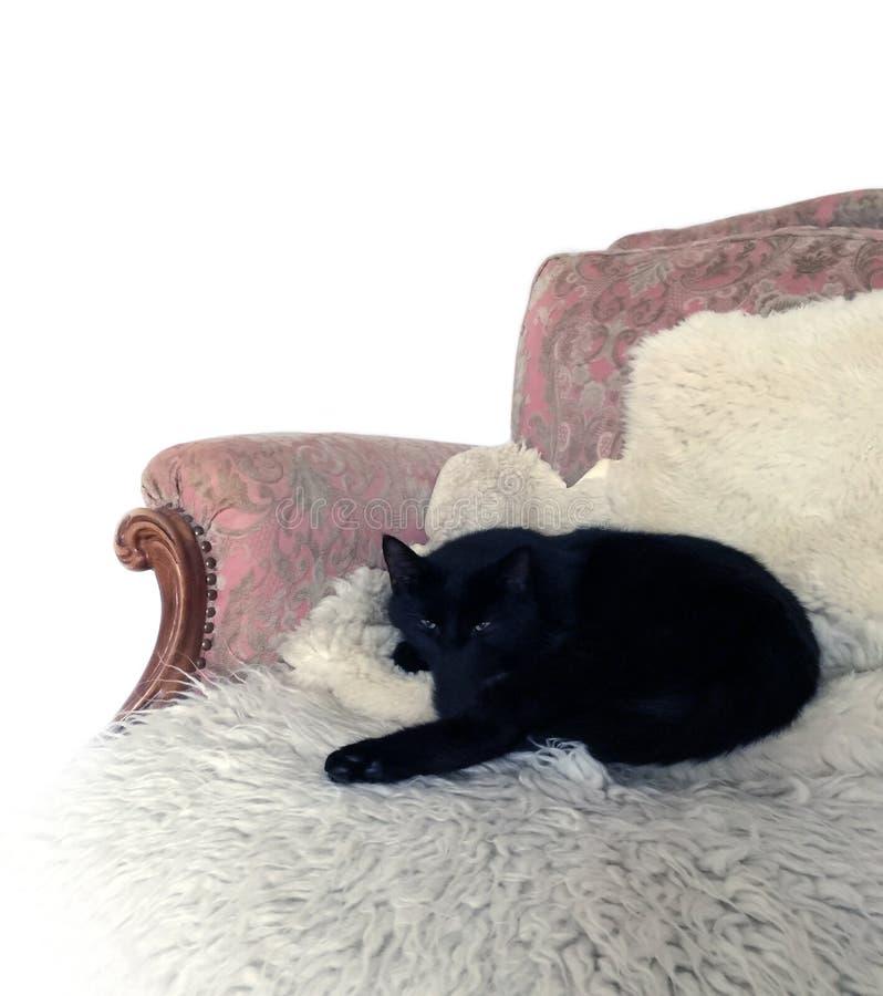 Zwarte kat in de bank stock foto