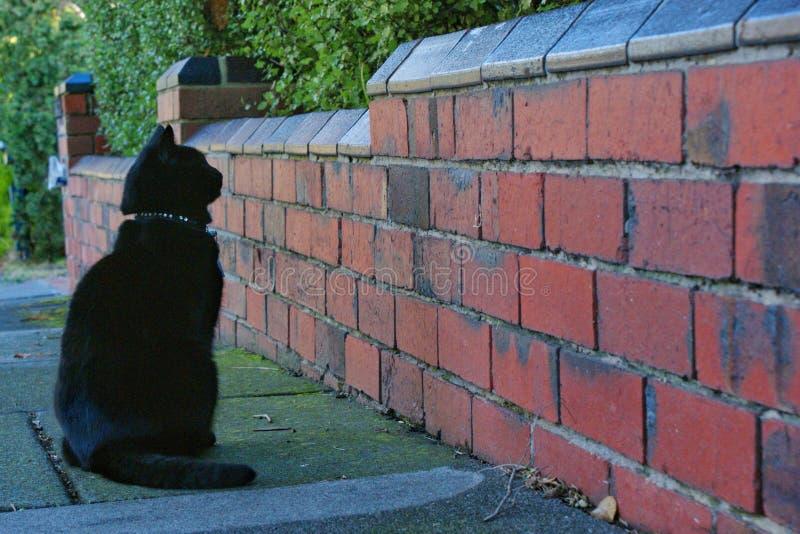 Zwarte kat die bij bakstenen muur meespelen royalty-vrije stock foto
