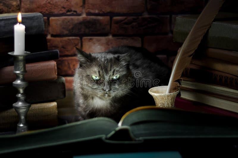 Zwarte kat die een groot boek lezen door kaarslicht stock fotografie