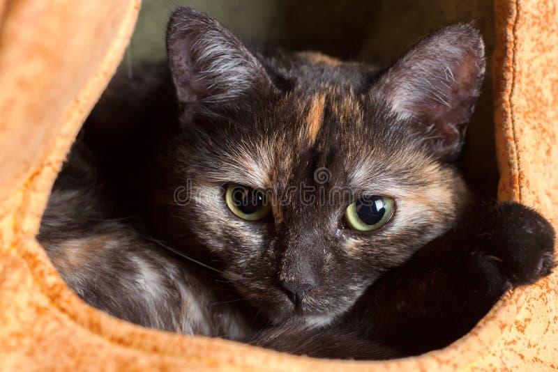 Zwarte kat die in een katten` s huis rusten stock fotografie