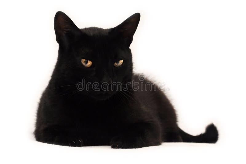 Zwarte kat die u bekijkt royalty-vrije stock foto