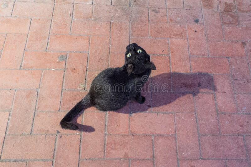 Zwarte kat die u op straat bekijken royalty-vrije stock fotografie