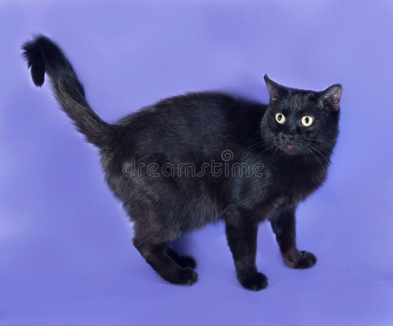 Zwarte kat die zich op sering bevinden royalty-vrije stock foto's