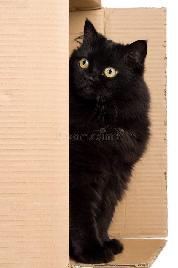 Zwarte kat in doos stock afbeeldingen