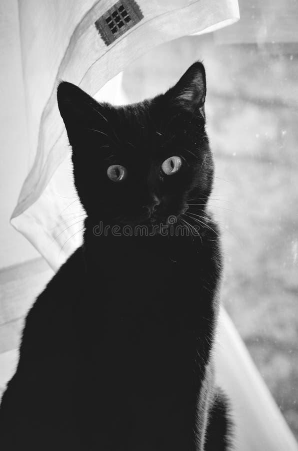 Zwarte kat en een netto gordijn royalty-vrije stock foto's