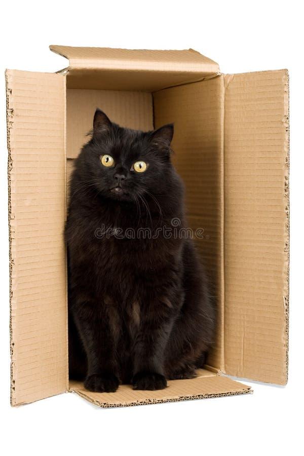 Zwarte kat in geïsoleerde doos stock afbeelding
