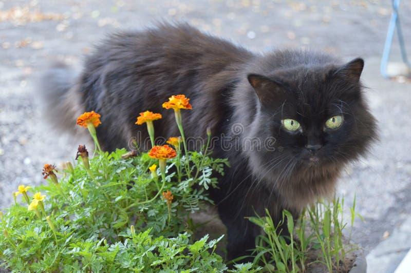 Zwarte kat in gemeenschap royalty-vrije stock fotografie