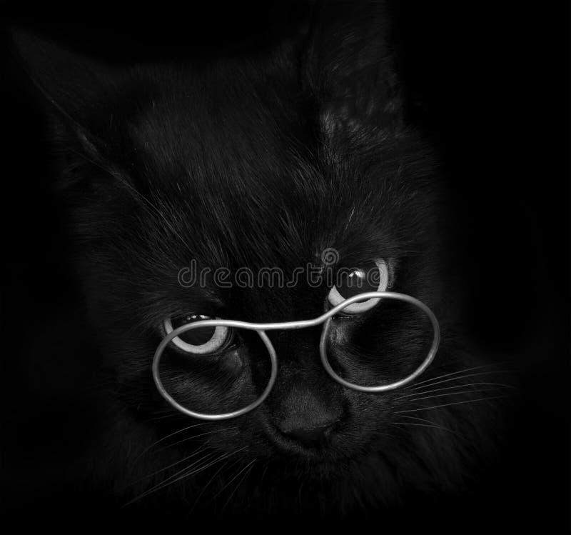 Zwarte kat met glazen stock foto's