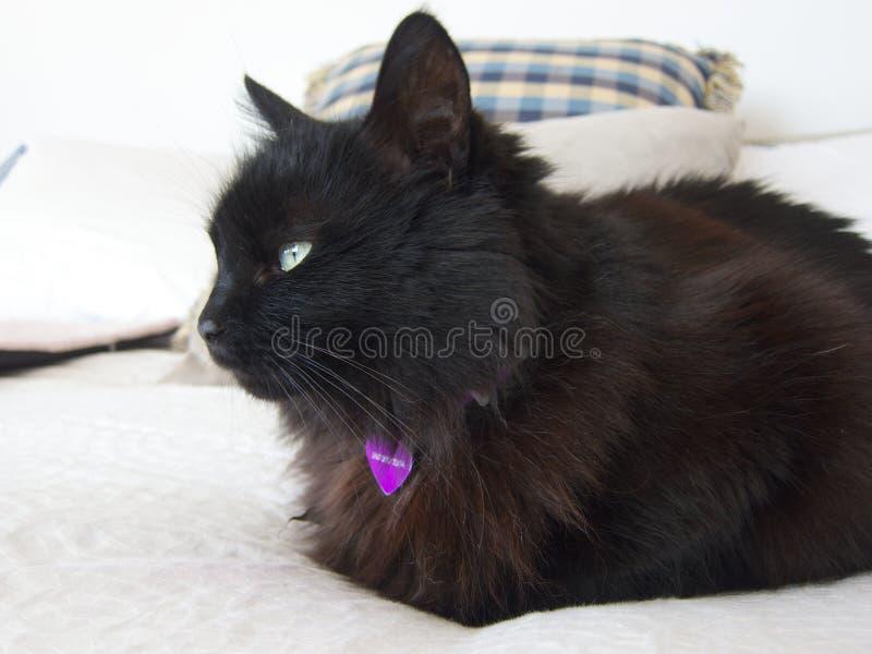 Zwarte kat op bed royalty-vrije stock fotografie