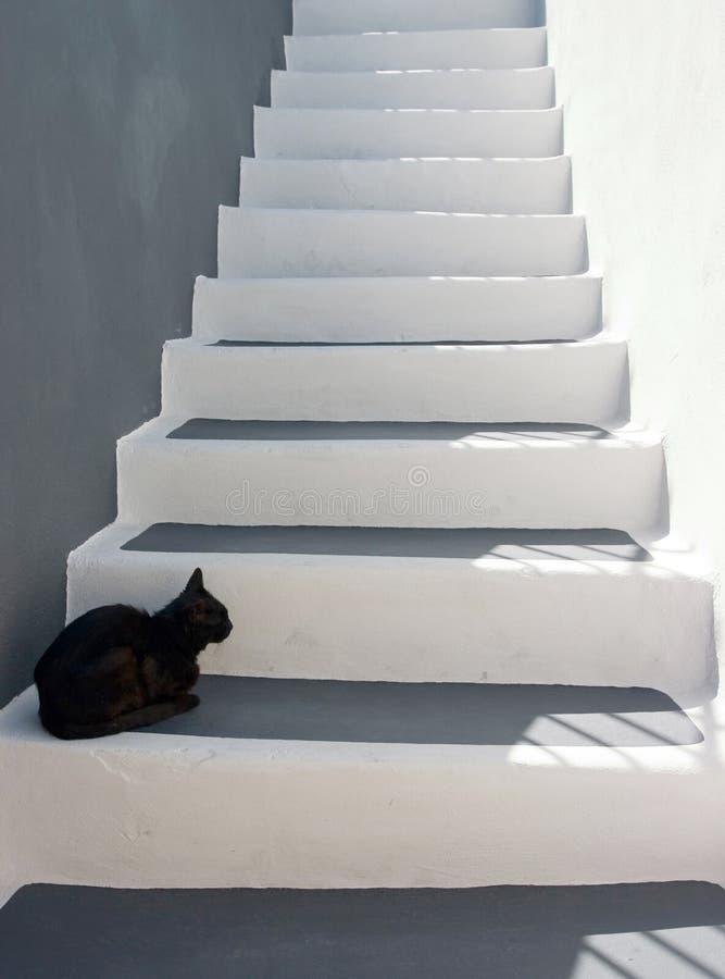 Zwarte kat op de treden stock fotografie