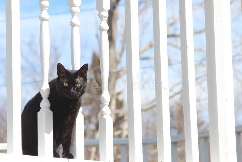 Zwarte Kat op Dek stock afbeeldingen