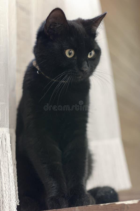 Zwarte kat thuis stock fotografie