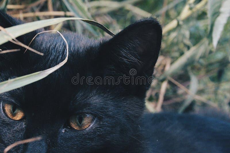 Zwarte kattenogen royalty-vrije stock afbeeldingen