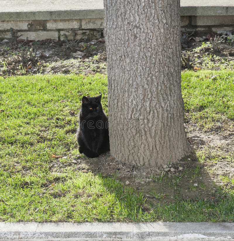 Zwarte kattenzitting in een park royalty-vrije stock fotografie