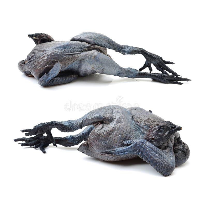 Zwarte kip stock afbeeldingen