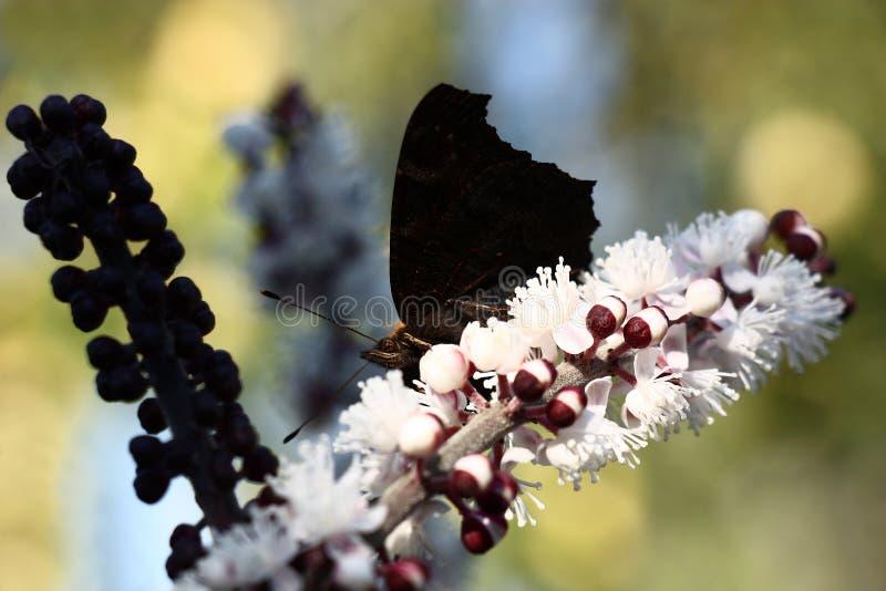 Zwarte kleur en schaduw stock afbeelding
