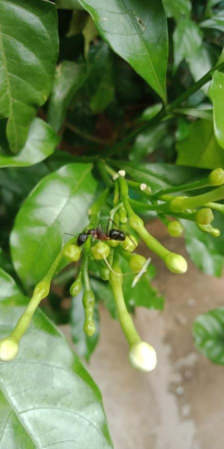 Zwarte mieren op bloemenboom royalty-vrije stock afbeelding