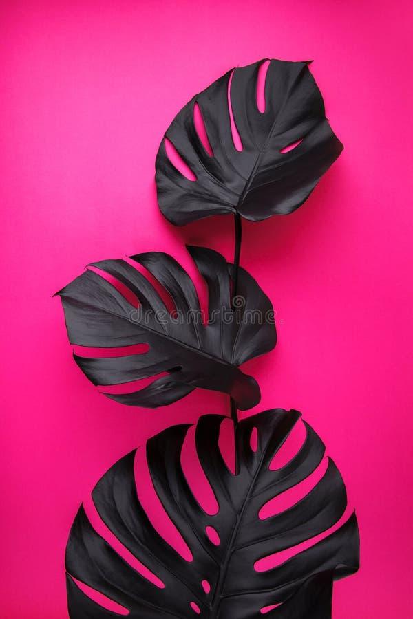 Zwarte monsterabladeren op plastic roze achtergrond stock foto