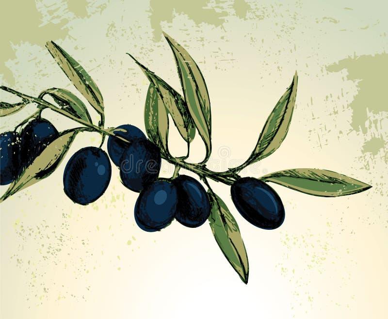 Zwarte olijven royalty-vrije illustratie