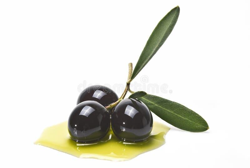 Zwarte olijven die in olie worden behandeld stock foto