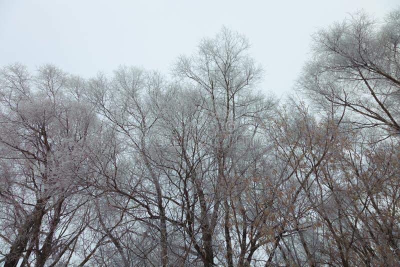 Zwarte oude wijven van bomen op een hemelachtergrond Russisch provinciaal natuurlijk landschap in somber weer gestemd royalty-vrije stock afbeelding