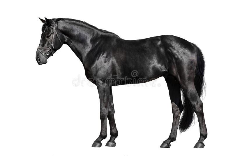 Zwarte paardbuitenkant royalty-vrije stock fotografie