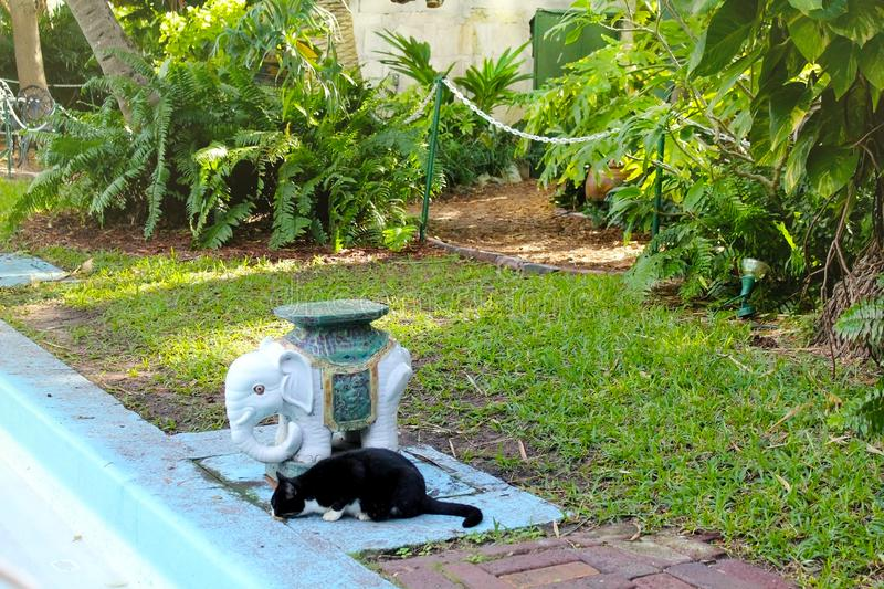 Zwarte polydactyl kat in Ernest Hemingway Home en het Museum in Key West, Florida stock fotografie