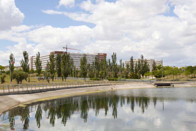 Zwarte populieren over een meer en een urbanisatie stock foto