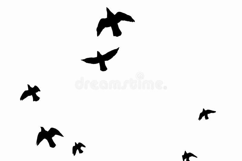 Zwarte profielen die vogels vliegen stock foto