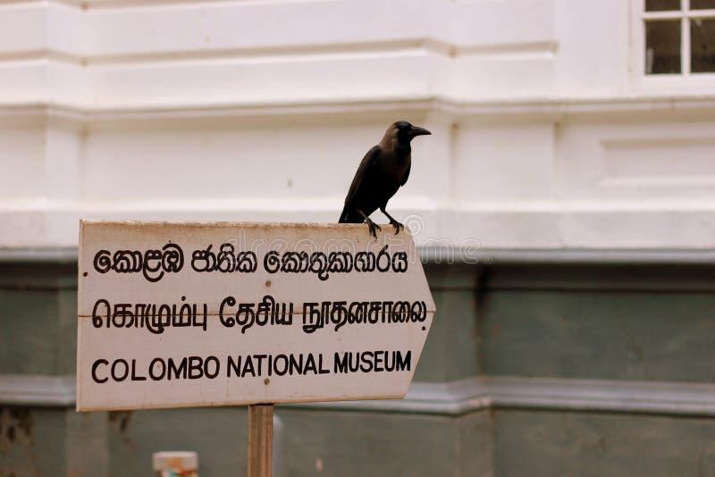 Zwarte raaf op colombo nationaal museum in Sri Lanka royalty-vrije stock foto
