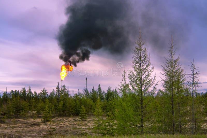 Zwarte rook in West-Siberië. royalty-vrije stock afbeeldingen