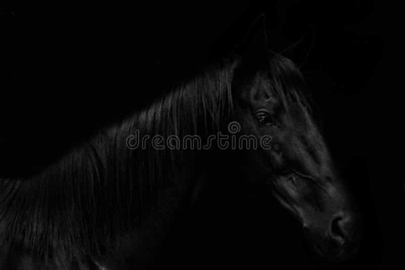 zwarte schoonheid die van snelheid zich in dark bevinden stock afbeelding