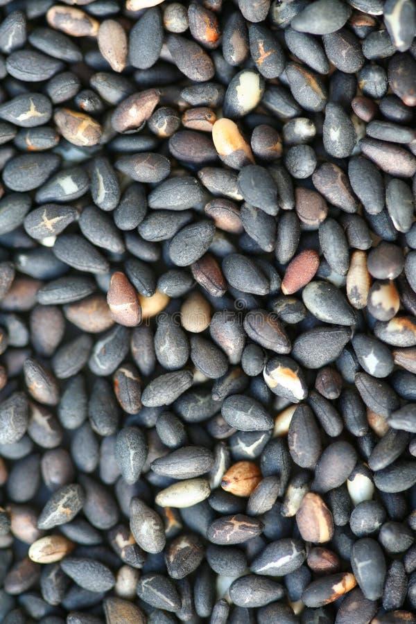 Zwarte Sesamzaden stock foto's