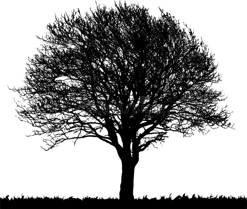 Zwarte silhouet naakte boom stock illustratie