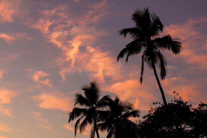 Zwarte silhouetten van palmen op een roze blauwe zonsonderganghemel royalty-vrije stock foto's