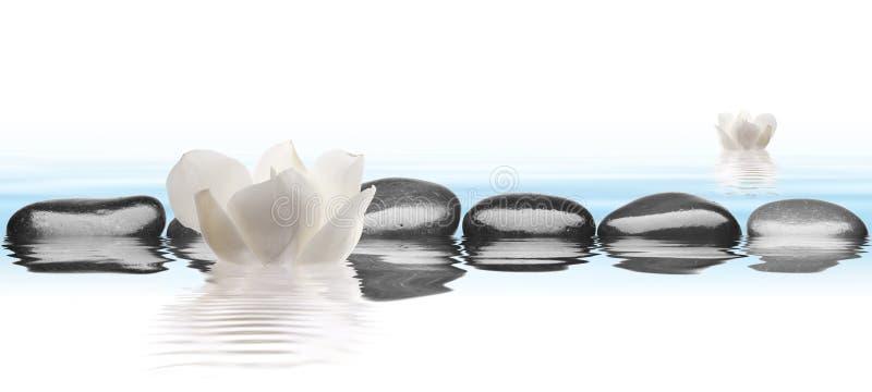 Zwarte stenen met bloem in water met witte achtergrond stock foto's