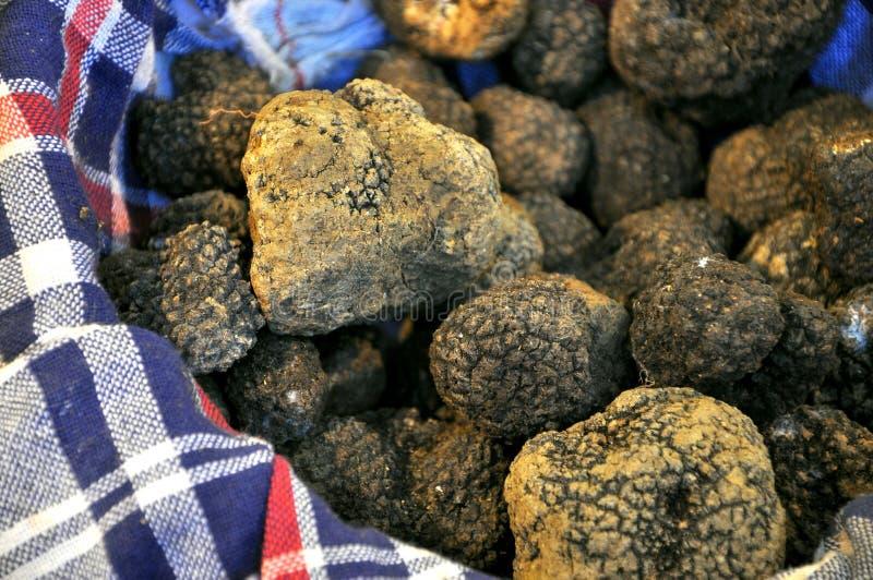 Zwarte truffel stock foto