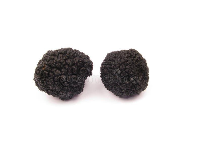 Zwarte truffel-knol aestivum royalty-vrije stock foto's