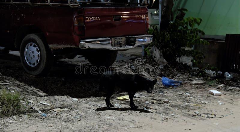 Zwarte verdwaalde hond van gemengd ras, kers-gekleurde Toyota-merkauto, afval op de straat, nacht royalty-vrije stock afbeeldingen