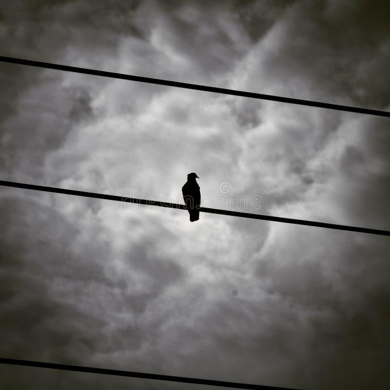 Zwarte Vogel op Draadsilhouet tegen Gray Cloudy Sky royalty-vrije stock afbeelding